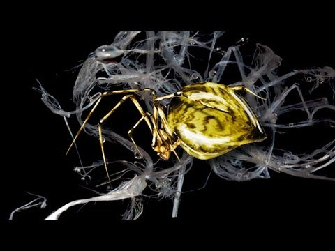 Why Is Spider Silk Five Times Stronger Than Piano Wire? - YouTube