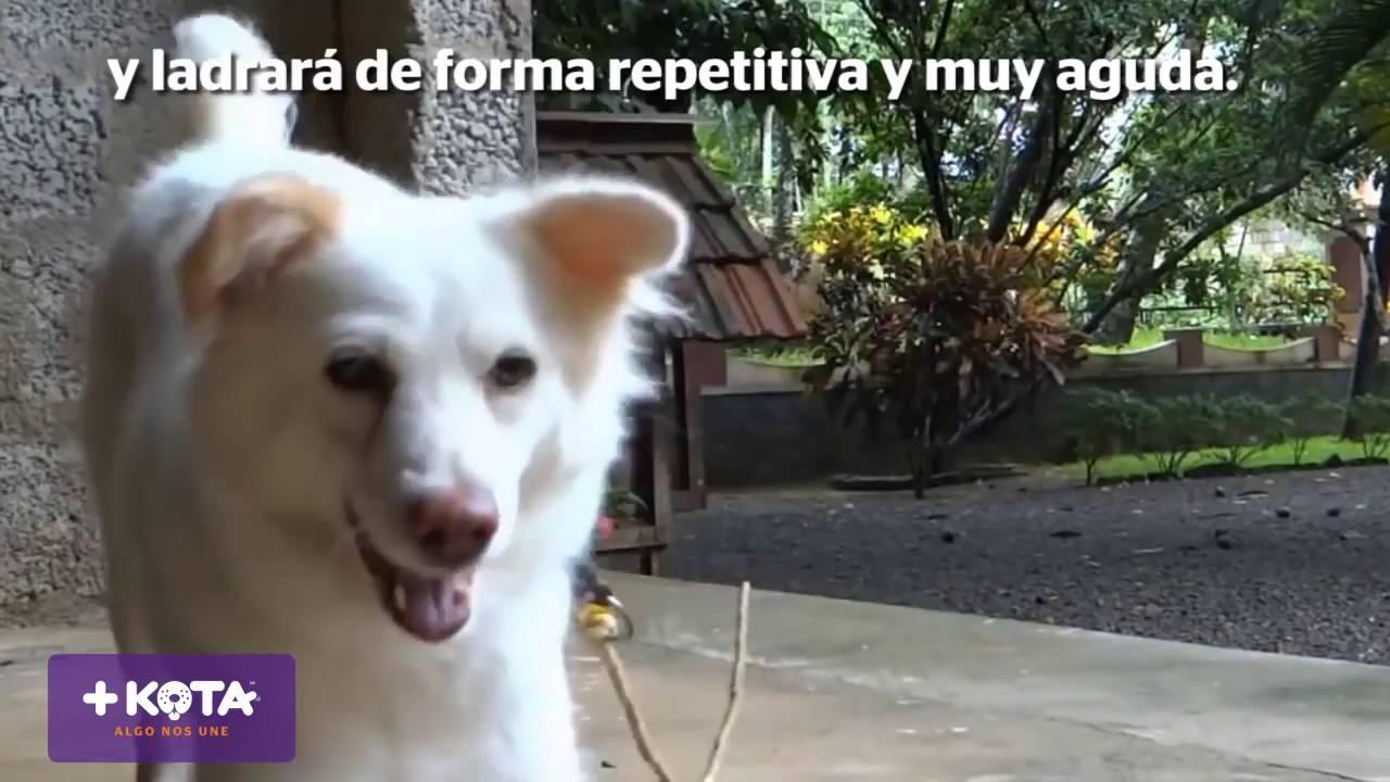 +KOTA: Qué significa el ladrido de los perros
