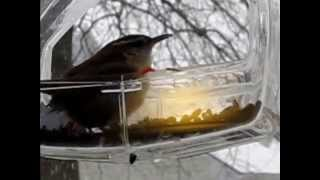 Bird At Window Birdfeeder