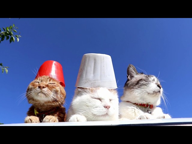 苗ポットを乗せた3匹の猫 190609