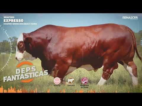 Touro Expresso - Braford - Sêmen Bovino - RENASCER BIOTECNOLOGIA VIDEO