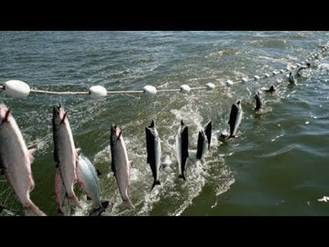 Everyone should watch this Fishermen's video - Amazing Automatic Net Fishing Line Catching Big Fish