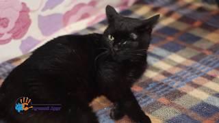 В добрые руки очень домашняя кошка Юля!