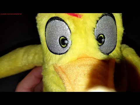 angry-birds-the-movie-2-continente-tcc:-chuck-plush