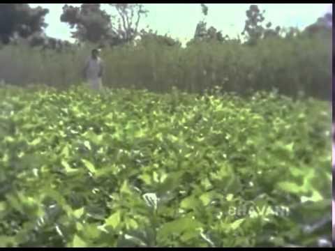 Youtube Telugu Movie Song Aathma Bandhuvu Manishiko Sneham Flv