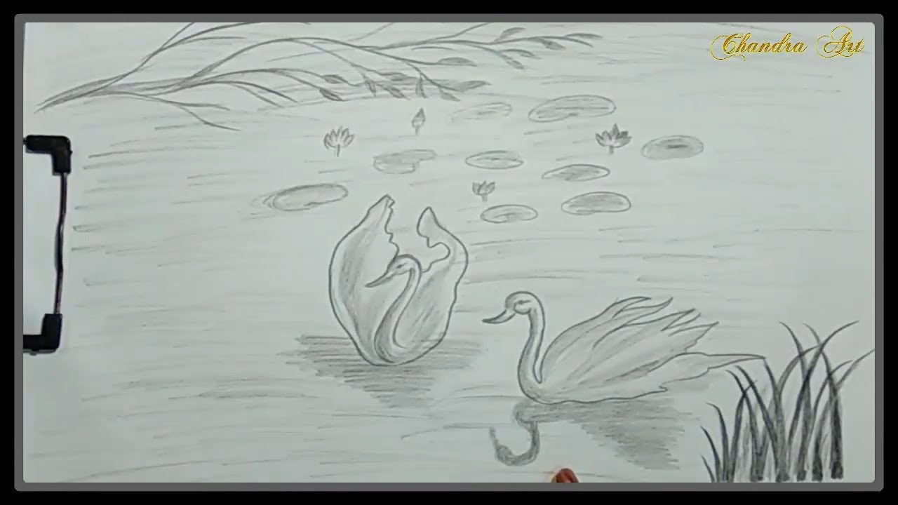Drawing Beautiful Scenery of a Lake With Swan With Pencils ...