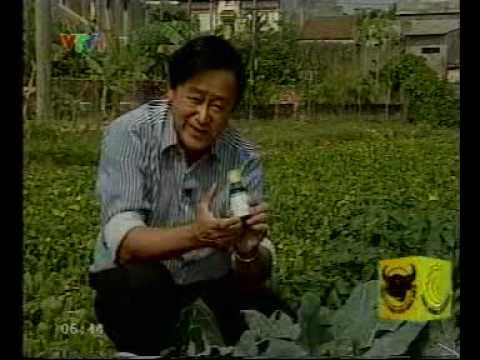 Giáo sư Nguyễn Lân Hùng nói về NEB-26 2