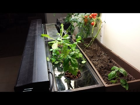 How To Build An Easy Small-scale Aquaponics System  For Your Aquarium