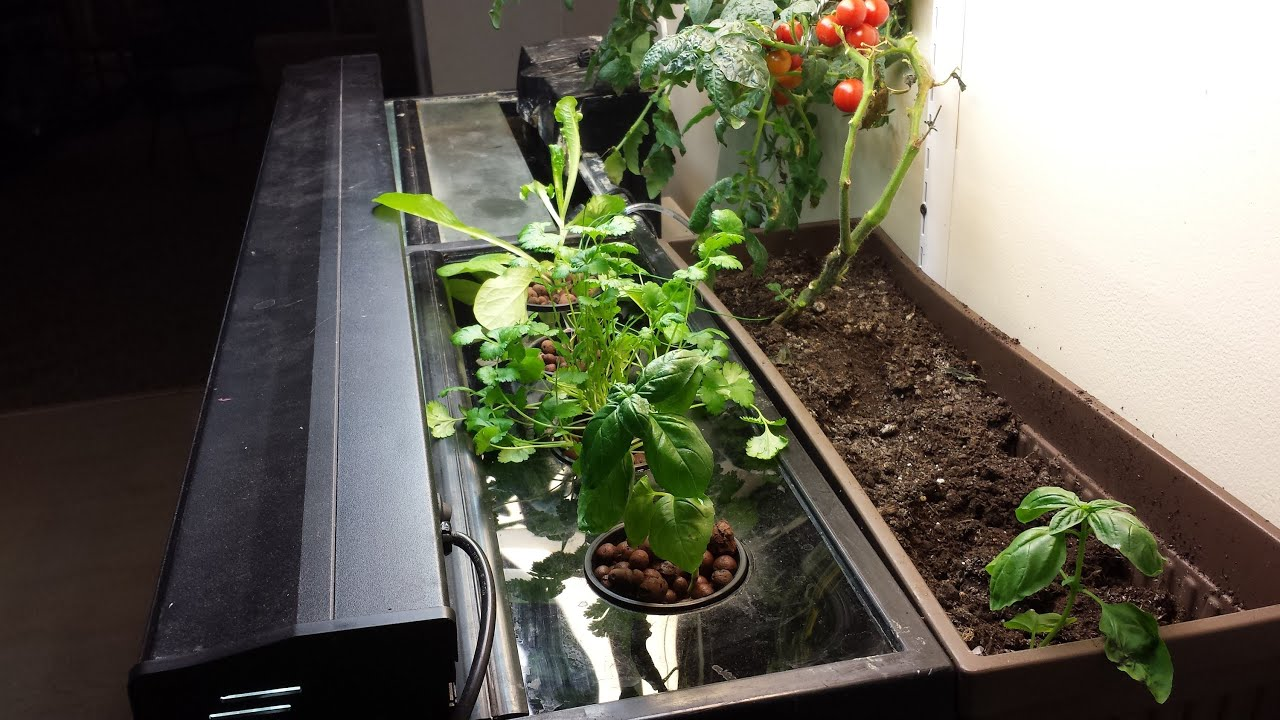 How to build an easy small scale aquaponics system for for Aquaponics aquarium