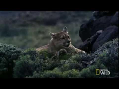 Sư tử con săn mồi nhanh như tên bắn