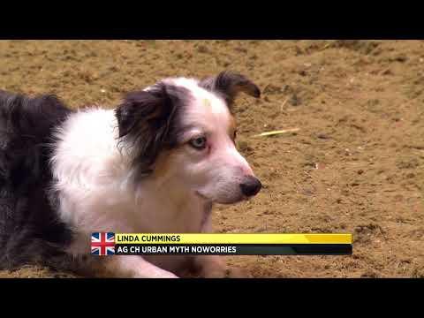 The Kennel Club Medium Dog Agility Finals at Olympia 2017