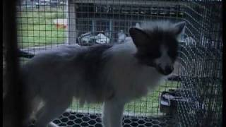 Fur Farms in the Republic of Ireland 2003