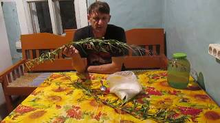 Иван чай. Нужна ли ферментация ?