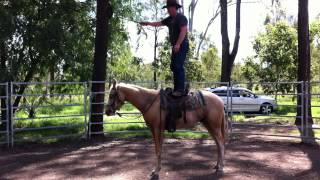 DAY 21 - Splash Palomino Horse training & breaking in - Amazingly quiet with JK Equine Solutions