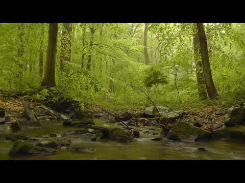 Deep Sleep Relaxing Music for Relaxed Souls,Natural Sound,Calm Sound, Soothing birds.