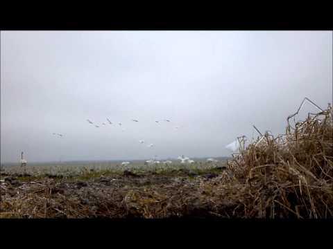Swan Quarter Flybys