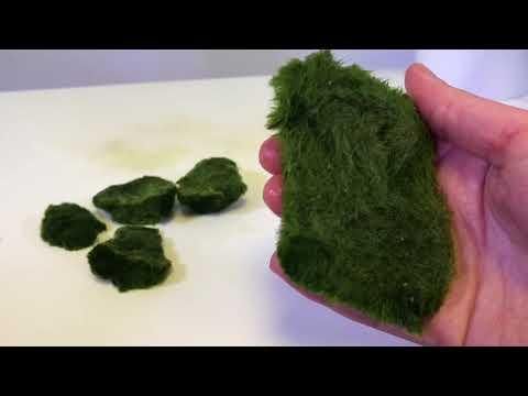How To Use Cladophora Marimo Moss Balls In An Iwagumi Aquascape