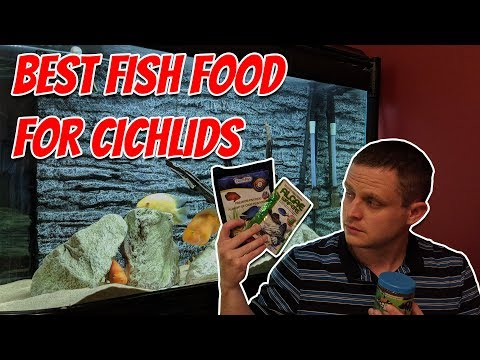 Best Fish Food For Cichlids. New Life Spectrum, NorthFin, Hikari And Tetra Fish Food Review  (UK)