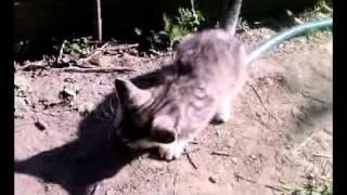 котенок и живая мышка.mp4