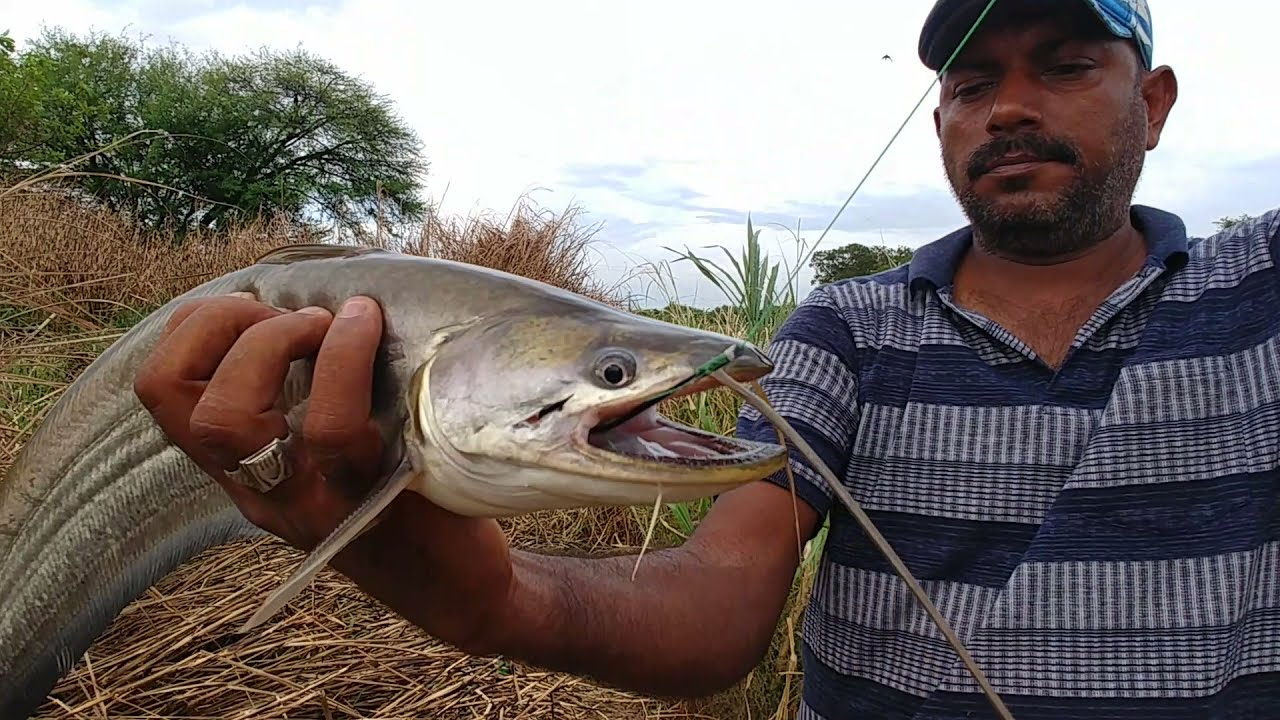 Unbelievable fishingvideo  Finding monster fishes at riverside  Look how he handled them(fisherman)