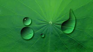 Hướng dẫn Photoshop CC: Cách tạo giọt nước đọng trên lá và Viết chữ lên kính nước.
