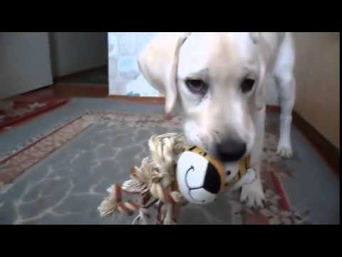 Комедии про собак и кошек Смешные животные - YouTube