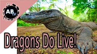 Dragons Do Live! Shannon Wild : AnimalBytesTV