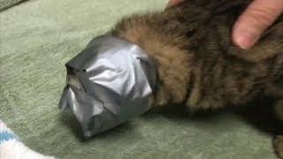 Бедную кошку замотали в скотч и выкинули на улицу...