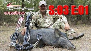 CNTV - Mission Boar Hunt
