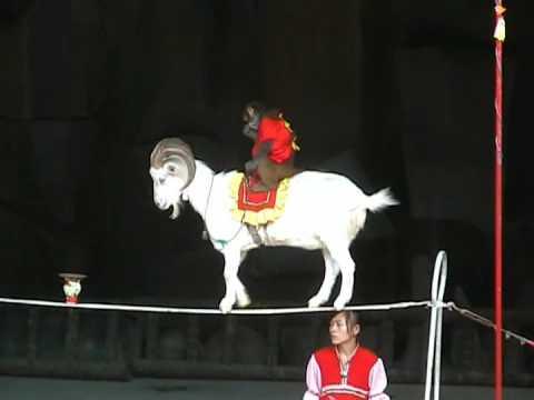 Китайский козел