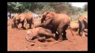 Kenia - Kenya's Funniest Home Videos