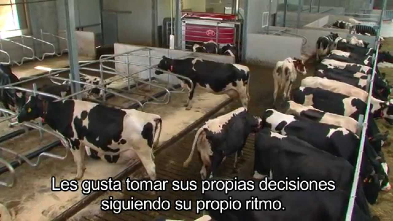 Lely Astronaut A4 - Benefits cow (Spanish / England)