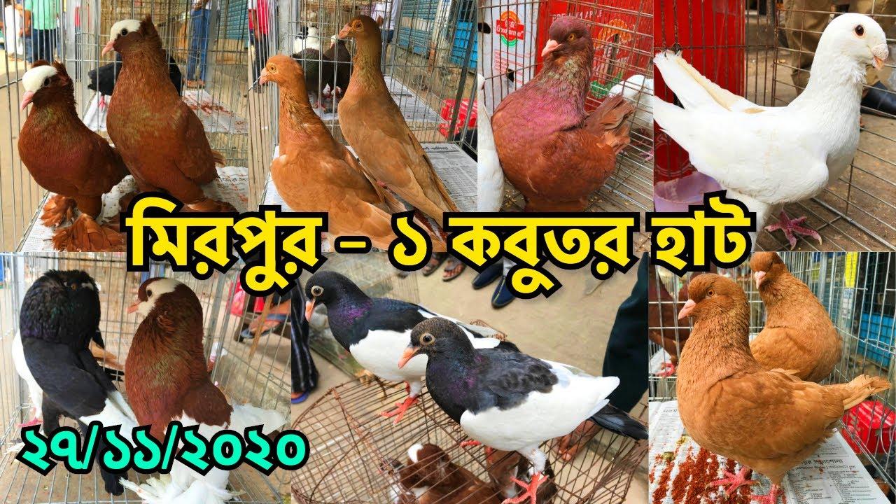 হাট বেশ জমজমাট কিন্তু বিক্রি কম | মিরপুর - ১ কবুতর হাট || Biggest Pet Market in Bangladesh (V - 192)
