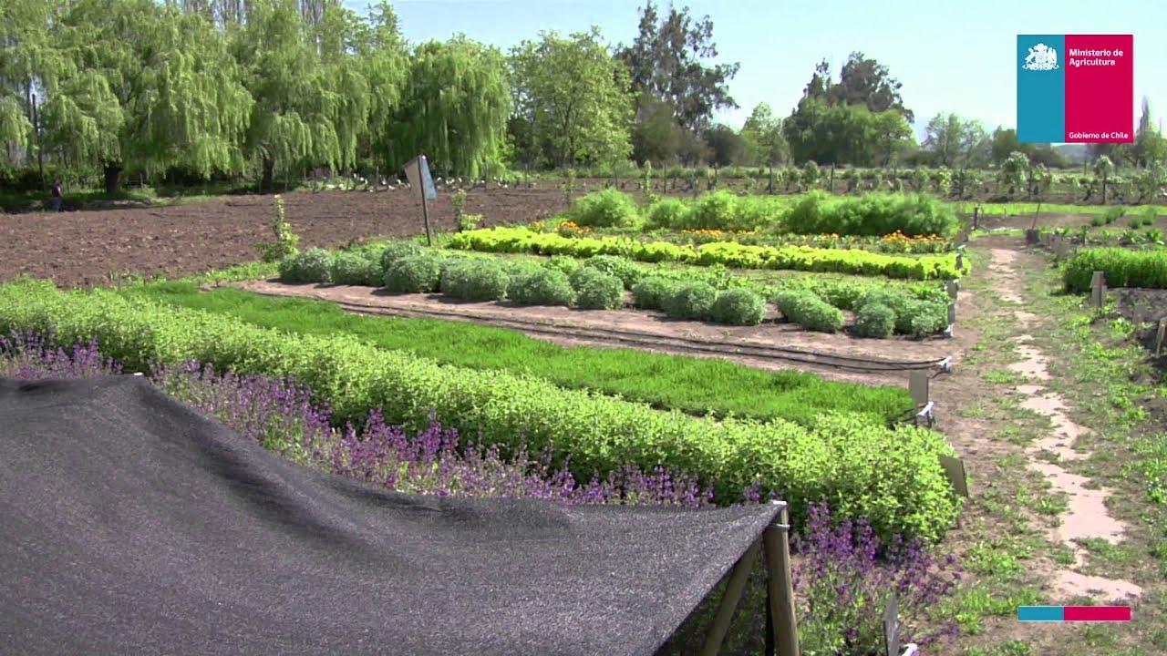Huerto de plantas medicinales youtube for Plantas beneficiosas para el huerto