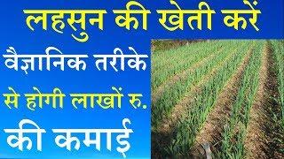 लहसुन की खेती करें वैज्ञानिक तरीके से होगी लाखों रु. की कमाई || Garlic Farming Technic for more prof