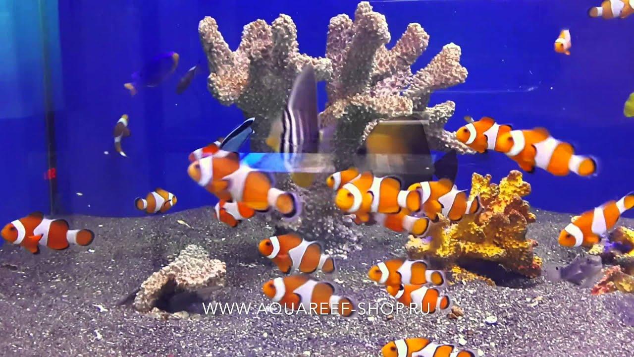 Компрессоры. Нужны для биологической фильтрации и аэрации ( обогащения кислородом) воды. Без этого ваши рыбки не смогут расти и радовать вас своей красотой и игривостью, им жизненно необходим кислород и чистая вода. Если вы решите купить аквариум в москве – обязательно закажите в.