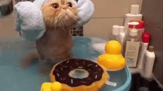 Смешные видео приколы про котов и других животных