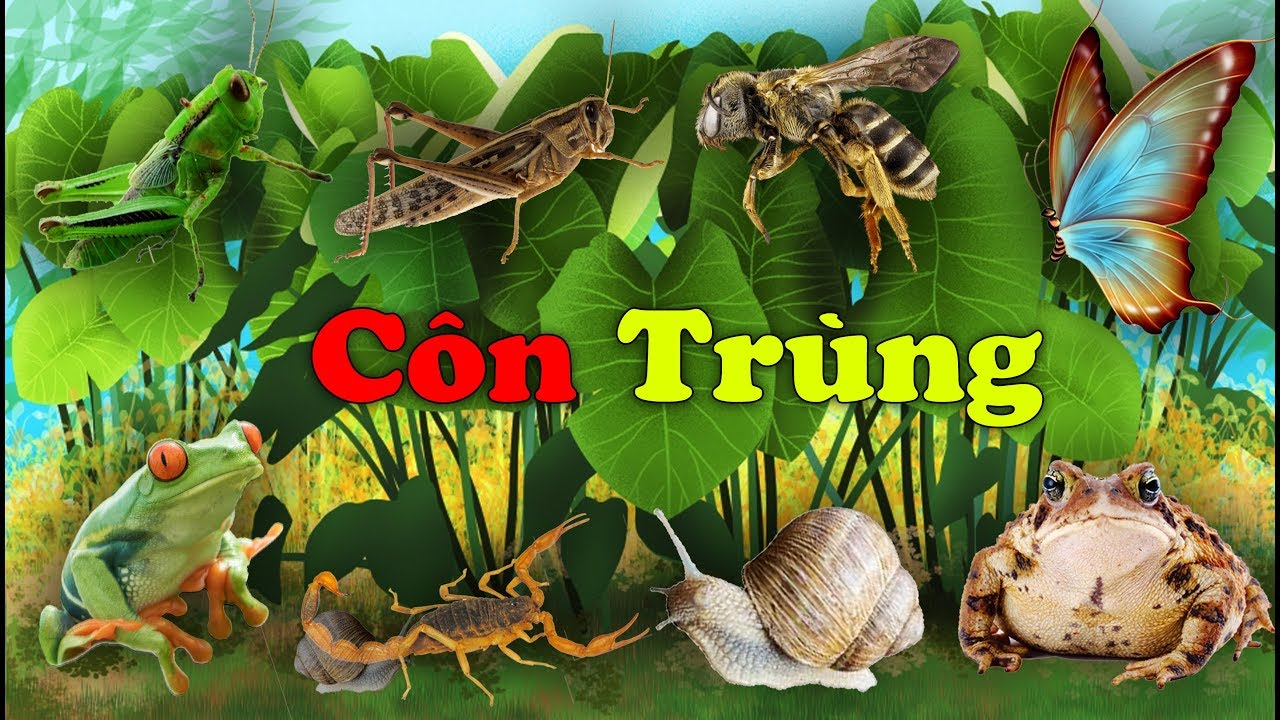 image Dạy bé học côn trùng #3 | Con gì đây | Learn About Insects