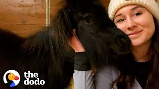 Mini Pony Has The Cutest Way Of Asking For Pets | The Dodo Soulmates