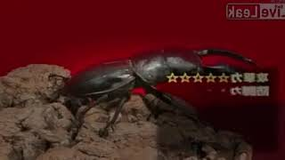 Тарантул против жука-оленя