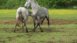 #2830. Лошади (В мире животных)