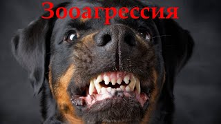 Агрессия к собакам / Dog Aggression Towards Other Dogs