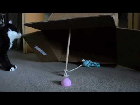 How To Catch A Cat (VIDEO)