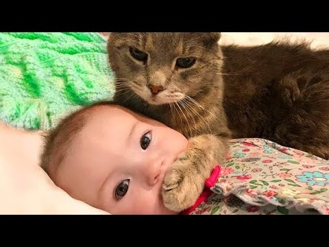 Funny Cat Videos 2020 - Baby and Cat Fun