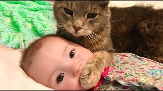 Funny Cat Videos 2020  Baby and Cat Fun