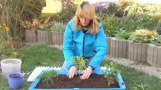 Домашний огород (ч.1). Травы.