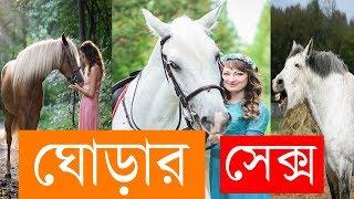 Download Video ঘোডার সাথে যৌনমিলন করে যে দেশের মেয়েরা l Khobor Bangla MP3 3GP MP4
