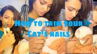 How to trim your cat's nails |grooming |spa #persiancat #kittens #pet #animals