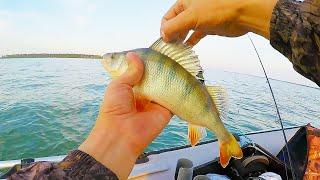 ОТВОДНОЙ ПОВОДОК В ДЕЛЕ!  Ловля окуня в июне. Рыбалка на спиннинг 2020