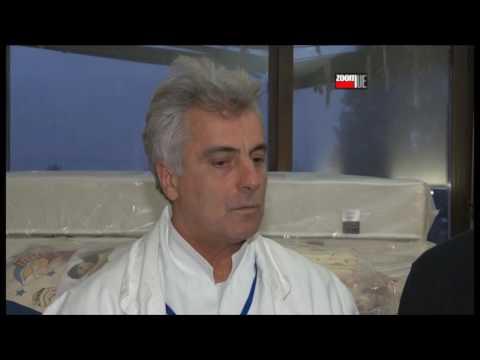Rade Marković ginekolog